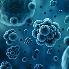 Biotechnology dissertation in pune